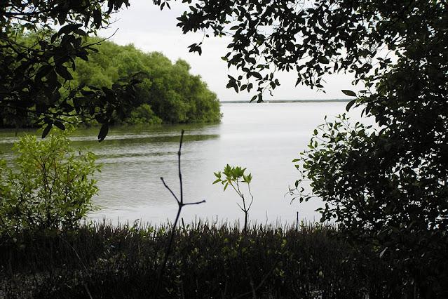 Muthupettai mangrove Udayamarthandapuram Birds Sanctuary