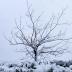 Χιόνια στα ορεινά Φθιώτιδας, Ευρυτανίας και Φωκίδας Πού χρειάζονται αλυσίδες