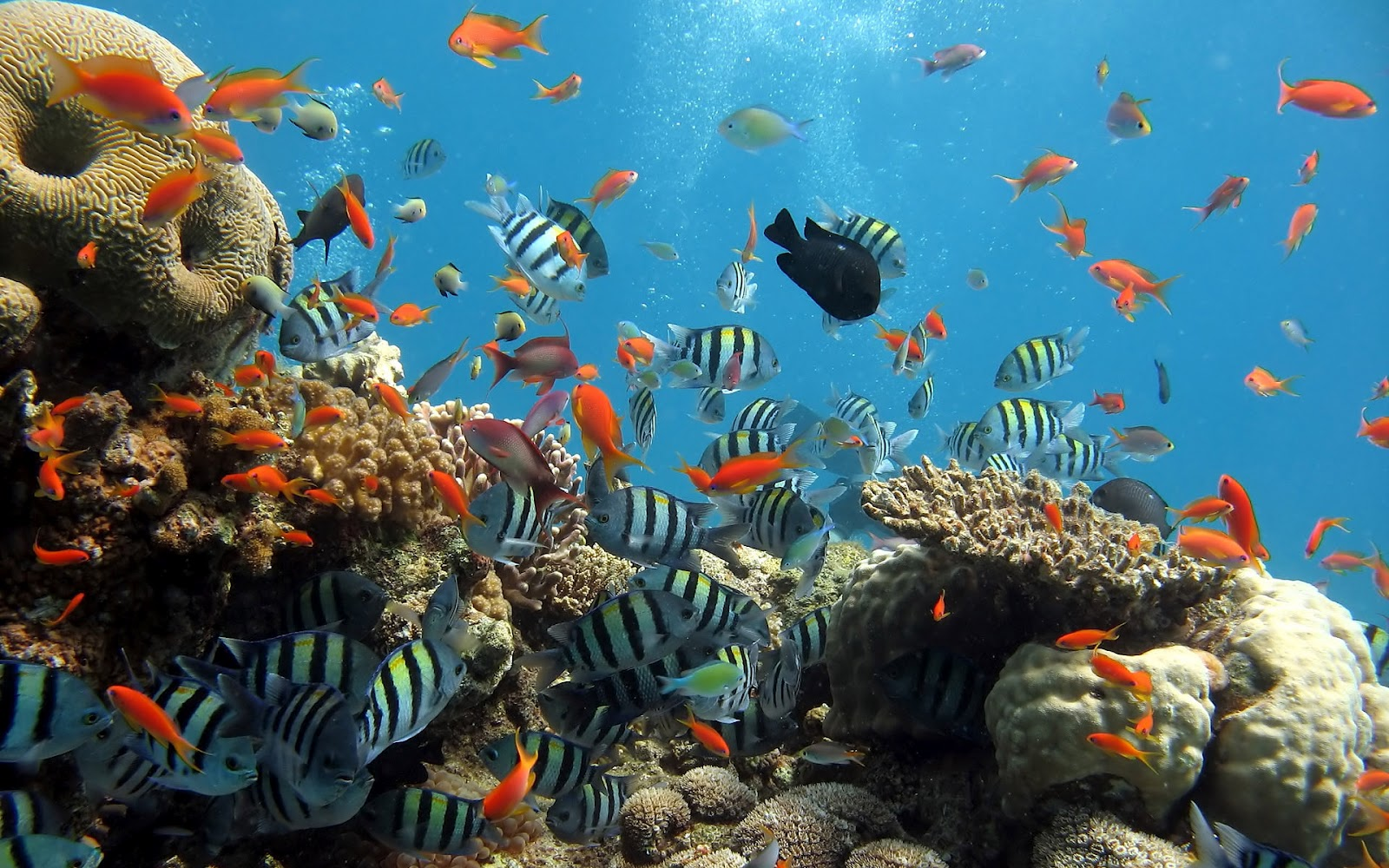 christianhdwallpaper: Coral Reef wallpapers