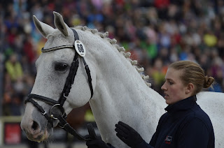 A white horse being lead in a competition 'trot up' with his rider.
