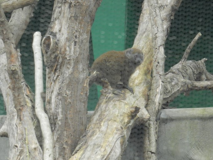 London Zoo Part II: Happy Families, Into Africa, and Birds