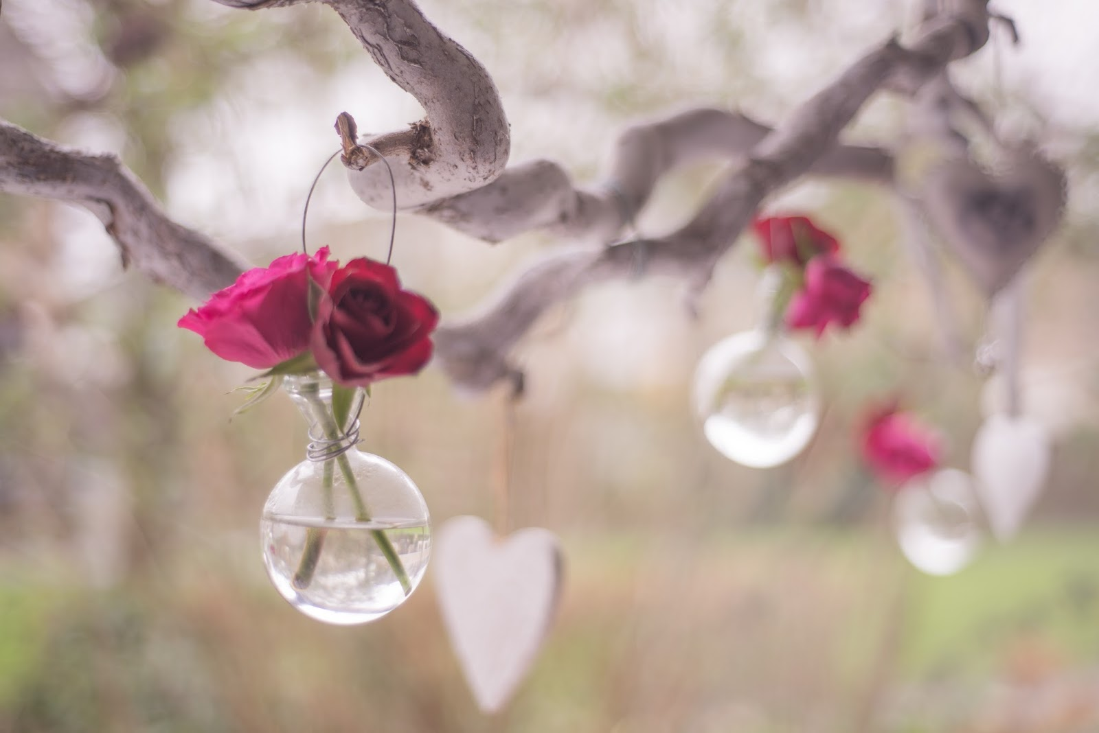 Pink roses o blog da mó valentine's day