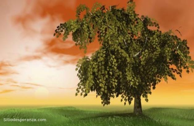 Reflexión: El árbol de los problemas