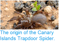 http://sciencythoughts.blogspot.co.uk/2014/12/the-origin-of-canary-islands-trapdoor.html