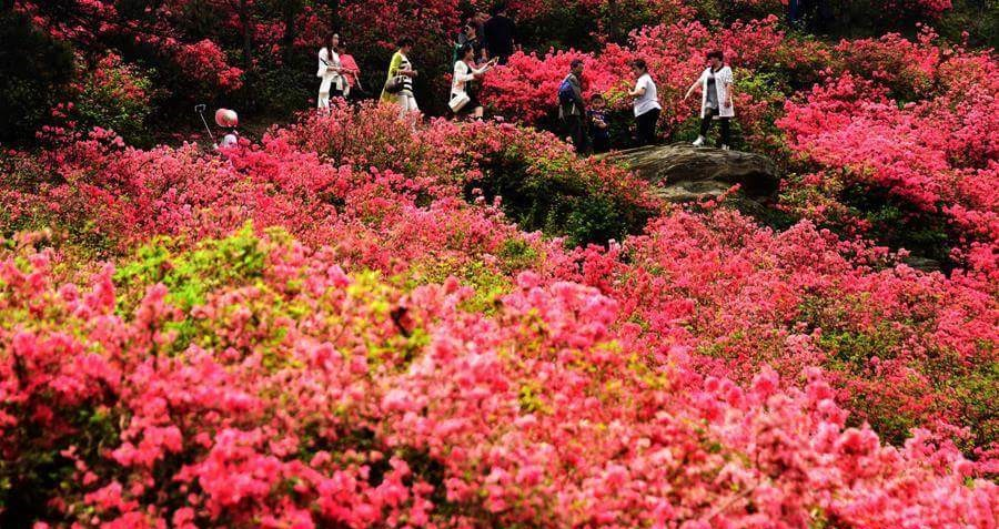 flower tourism in China, flowerbeds in China