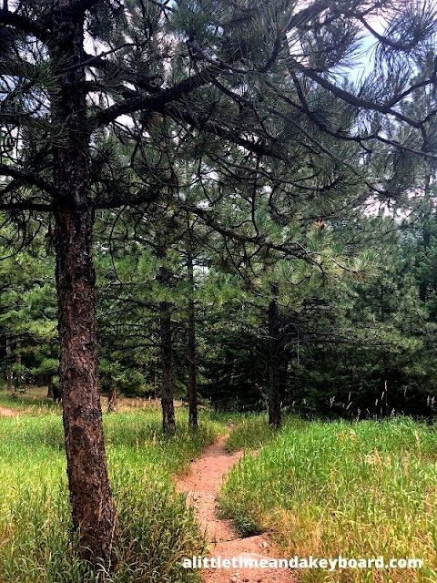 The natural path leading us into a section thick with evergreens.