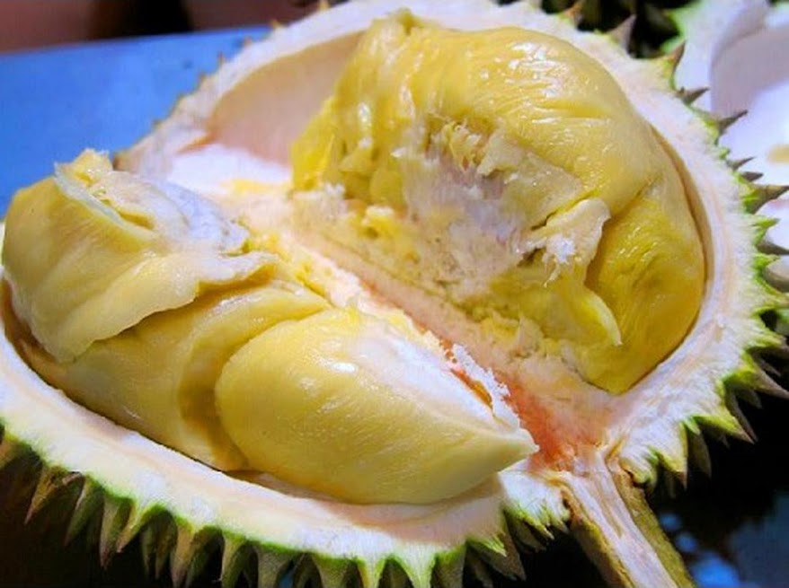 Bibit Tanaman Buah Durian Montong Banten