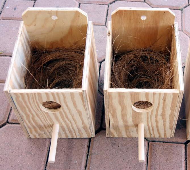 All About Love Bird: Kotak Sarang Untuk Lovebird