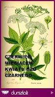 http://durszlak.pl/akcje-kulinarne/czerwiec-miesiacem-kwiatu-bzu-czarnego-0038970a-0e6a-4f2b-a734-d49fcf1a76b7#fndtn-panel-aktualne