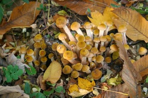 Ricetta Funghi al naturale - Fungo Center