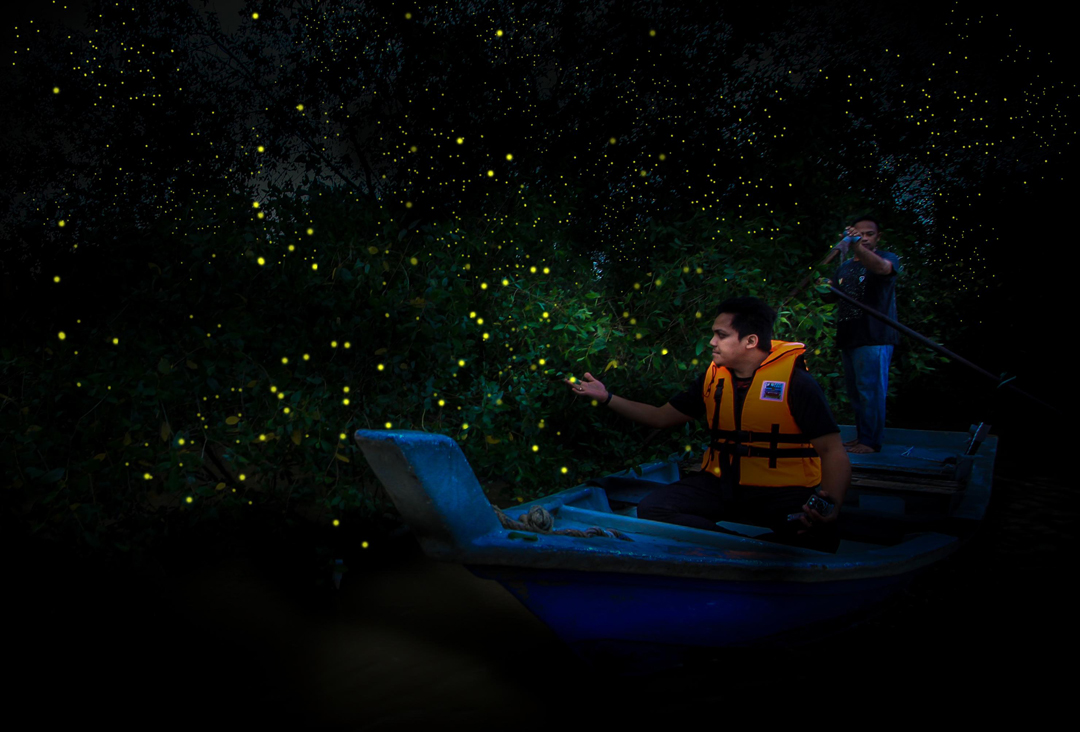 Magnificient fireflies at Kg Dew Taiping