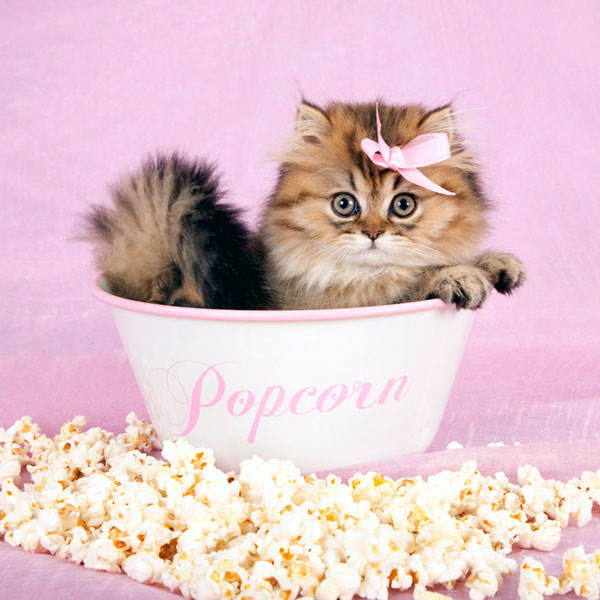 Why Can T Cats Eat Popcorn