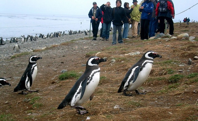 www.xvlor.com Los Pingüinos Natural Monument is the home islands of Magellan penguins