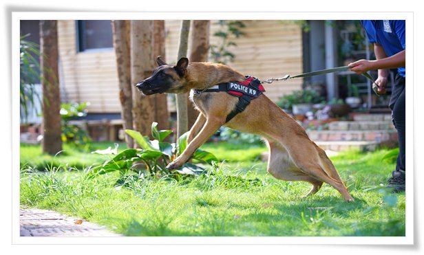 training a dog who bites