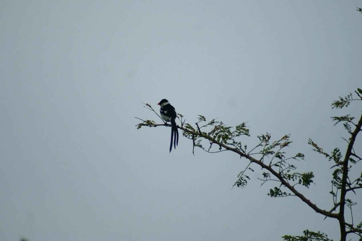 南非旅游大使 - 生態遊 2012: 南非的美麗鳥兒 by Eunice Cheung@Group 2