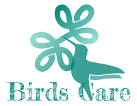The Ultimate Revelation of How to Take Care of Best Pet Bird Types and Species - birds-care.com