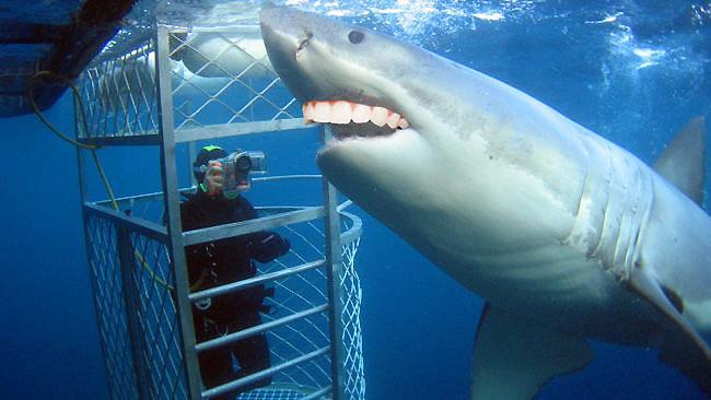 Sharks with human teeth - photo#55