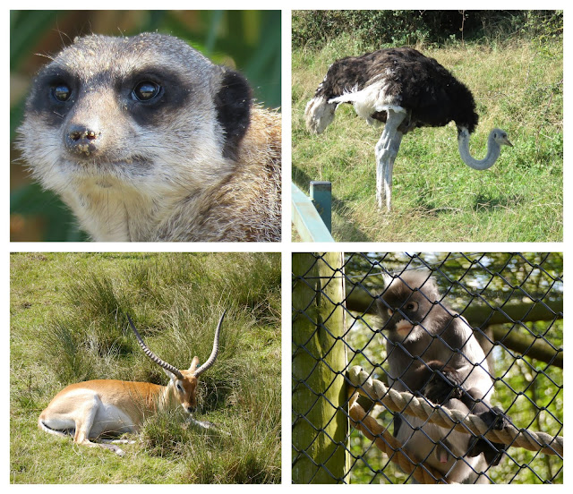 4 animals at port Lympne