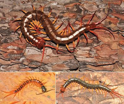 Species New to Science: [Invertebrate • 2016] A Taxonomic