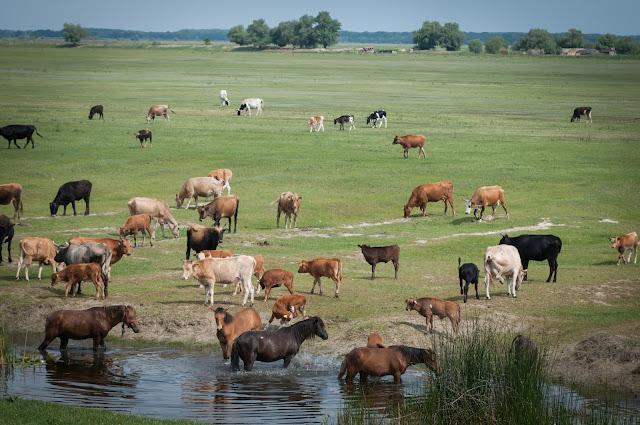 Animalutele-tovarase de dimineata, langa Canalul Stipoc