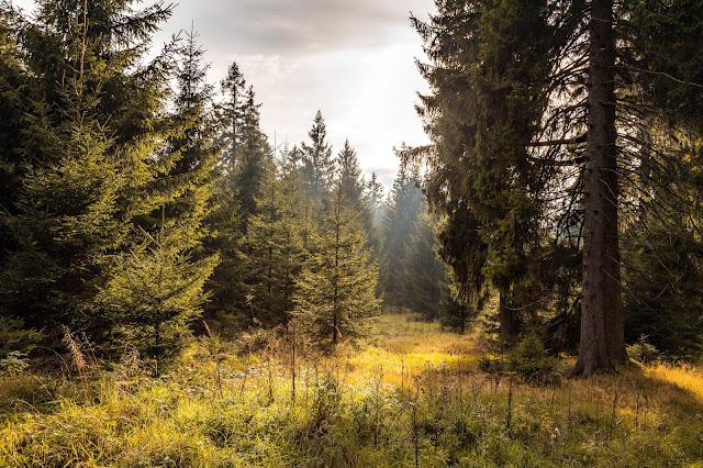 Drei-Täler-Tour  Themenwanderweg Bad Harzburg  Wandern im Harz  Baumwipfelpfad - Radauwasserfall - Eckertalsperre 01