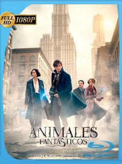 Animales Fantásticos y Dónde Encontrarlos (2016) HD [1080p] Latino [GoogleDrive] SilvestreHD