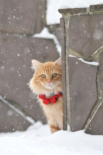 Beautiful winter scene with orange cat in snow