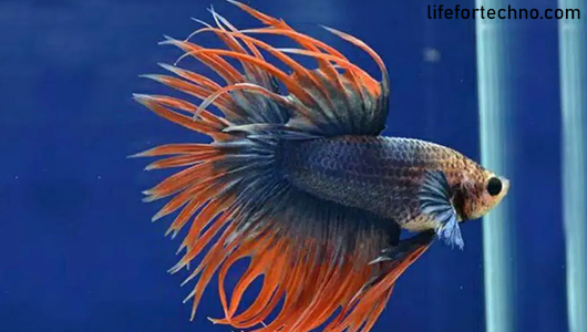 6 Ways of Betta Fish Business for Beginners to Make Big Profits