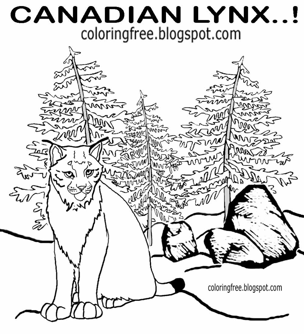 Printable Canada Forest Countryside Wildlife Coloring Sheet Canadian Big Cat Lynx Drawings For Teens