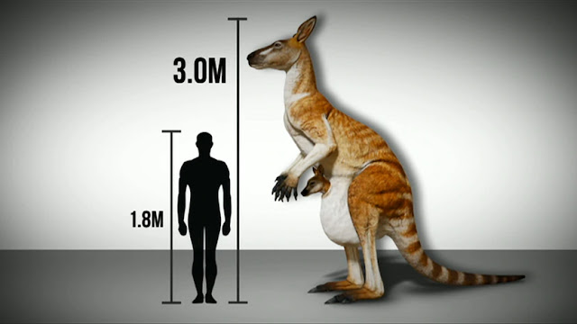Humans lived alongside giant kangaroos and lizards in ancient Australia