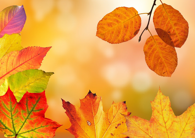 Giving Your garden Some TLC, Even Though Autumn - leaves