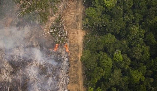 Desmatamento subiu 50% em 2019, indicam alertas do Inpe