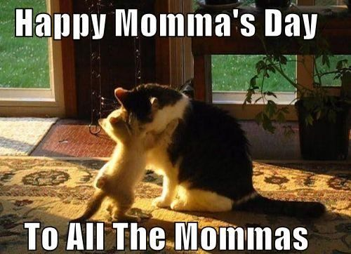 happy mother's day 2017 wishes images from the cat,Dog