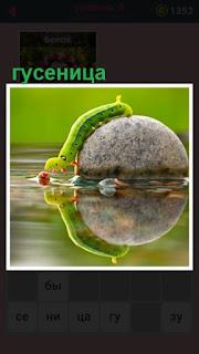 651 слов гусеница из воды ползет на камень 9 уровень