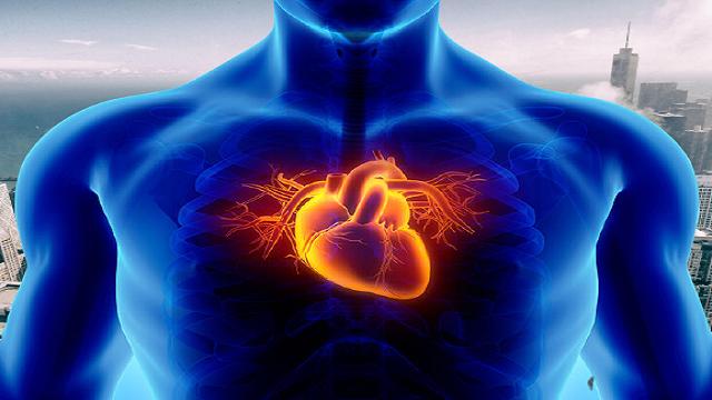 Diminishes possibility of coronary illness