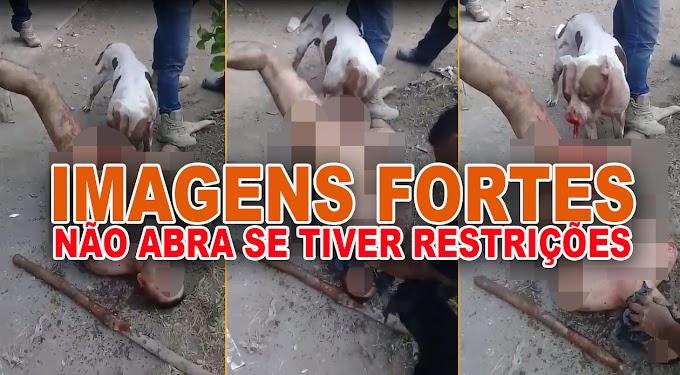 ATENÇÃO: CENAS FORTES! Homem tem partes íntimas devoradas por pitbull