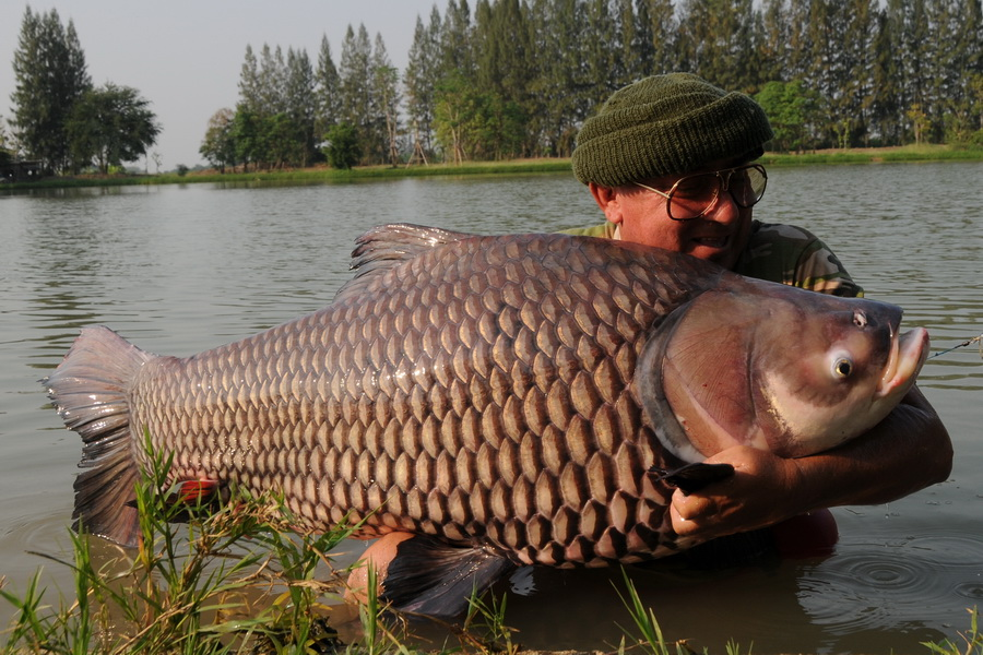 Big Fishes Of The World Giant Siamese Barb Carp Page 2
