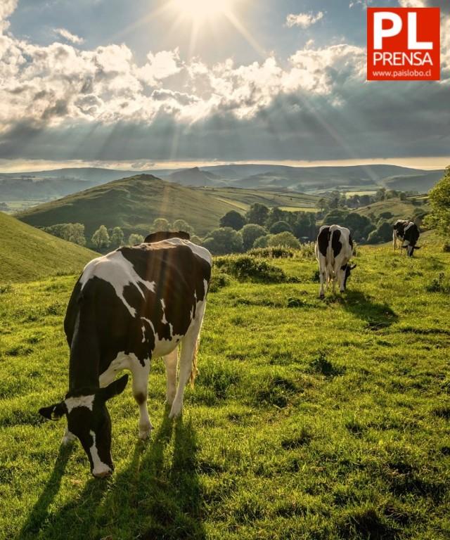 Diagnóstico para la gestión de residuos inorgánicos y orgánicos en el sector lácteo