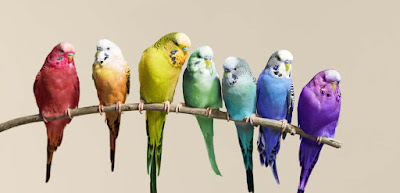 nice-colorful-birds-sitting-on-the-branch-images