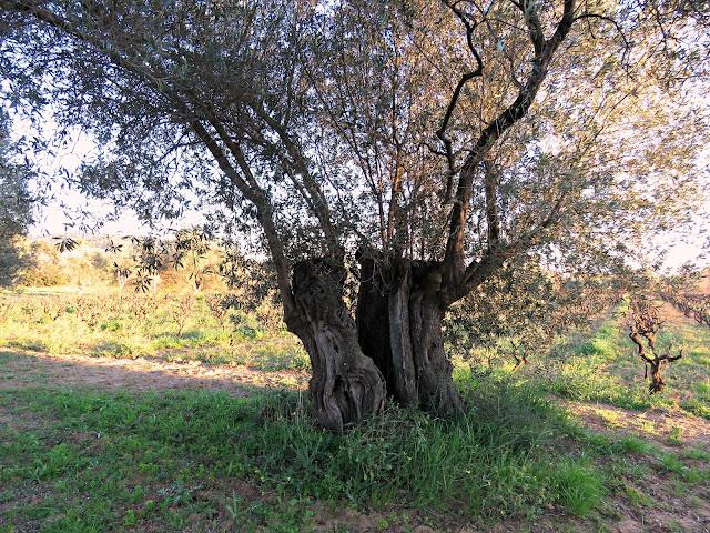 Mas Molla, Calonge (Girona)