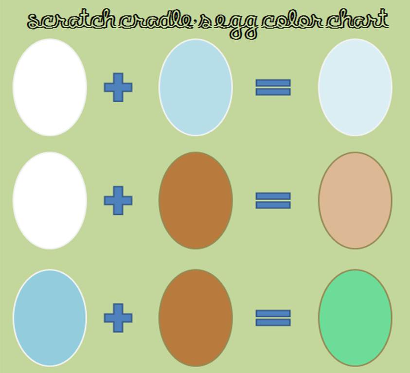 All About Egg Color | Community Chickens