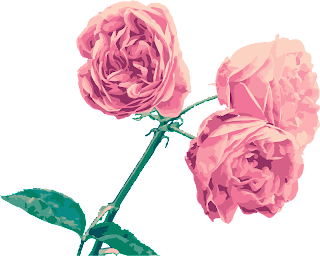 gambar bunga kaerun mawar