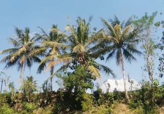 Goa Pindul o Cueva Pindul. Oyo River.