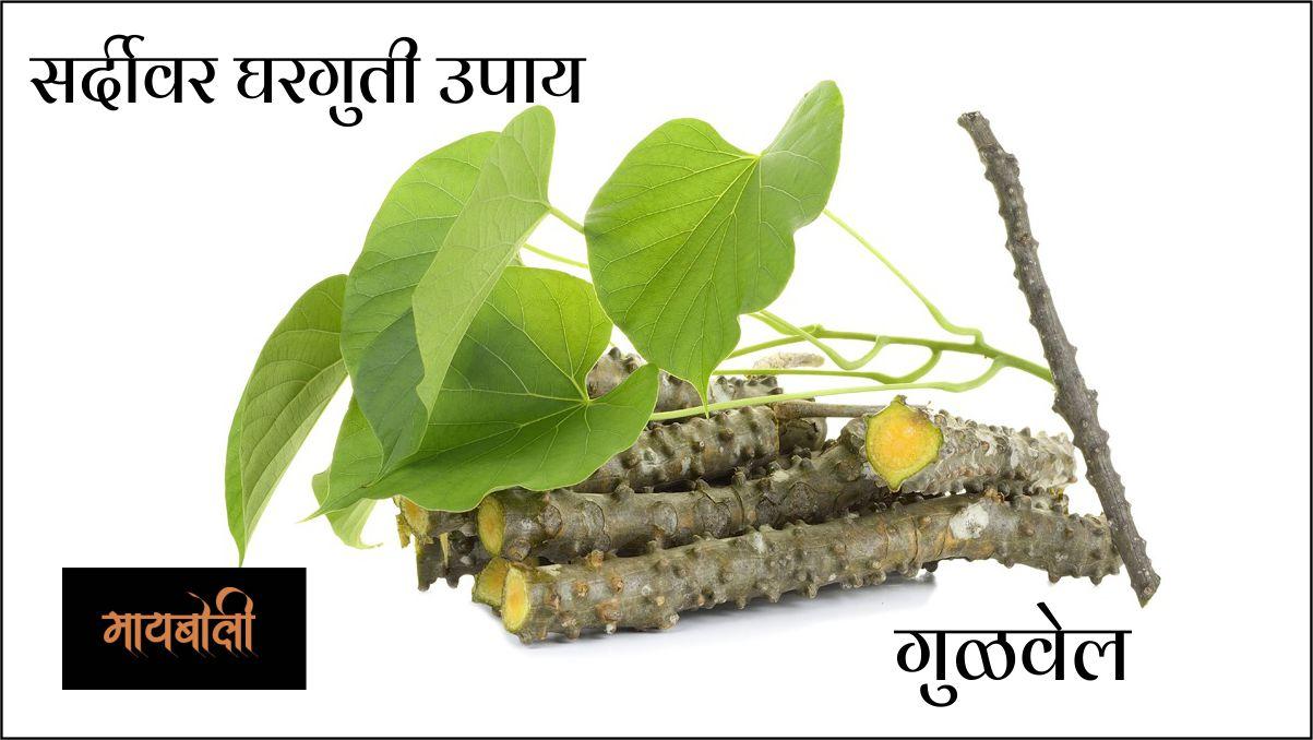 सर्दीवर घरगुती उपाय - giloy in marathi