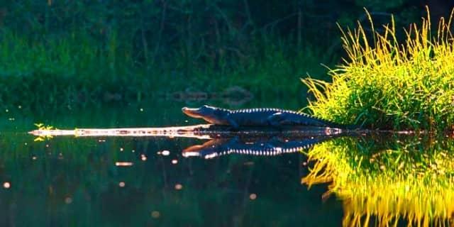 Spot Mancing Sungai Cidano