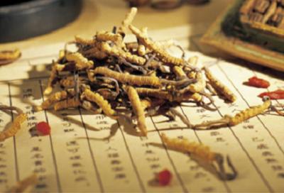 Giá đông trùng hạ thảo nguyên con vô cùng đắt đỏ