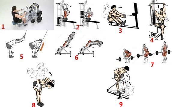 The Big Back Workout