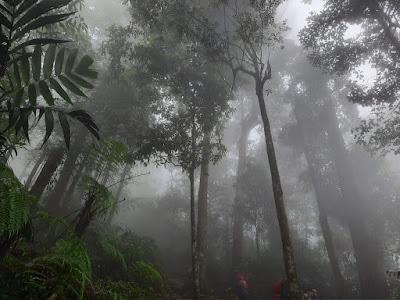 Excotisme Hutan Sanggabuana