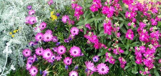 Flores en el jard n durante todo el a o - Plantas perennes exterior ...