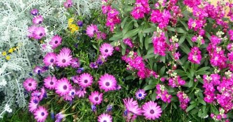 Disfrutar con el huerto y el jard n flores en el jard n - Plantas para el jardin todo el ano ...